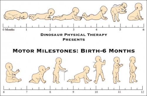 motor milestones for infants from birth to 6 months